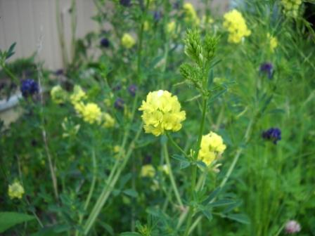 Perennial seeds price list mightylinksfo